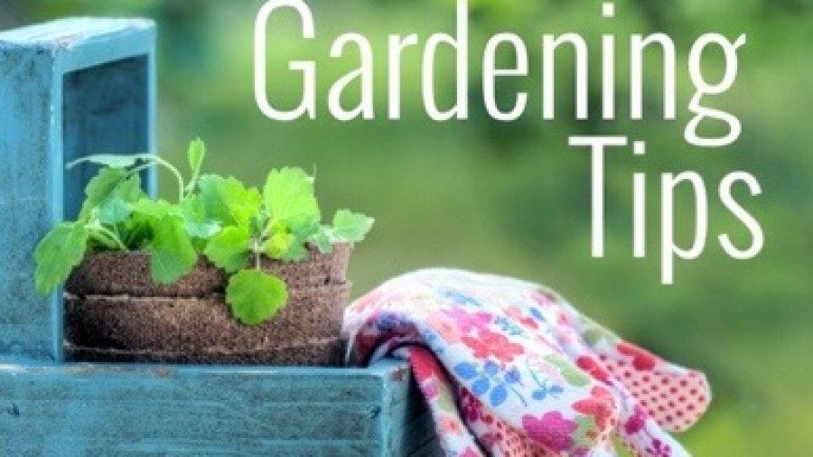 Pre-season Gardening Tips