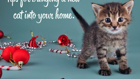 Tips for bringing a new cat into your home