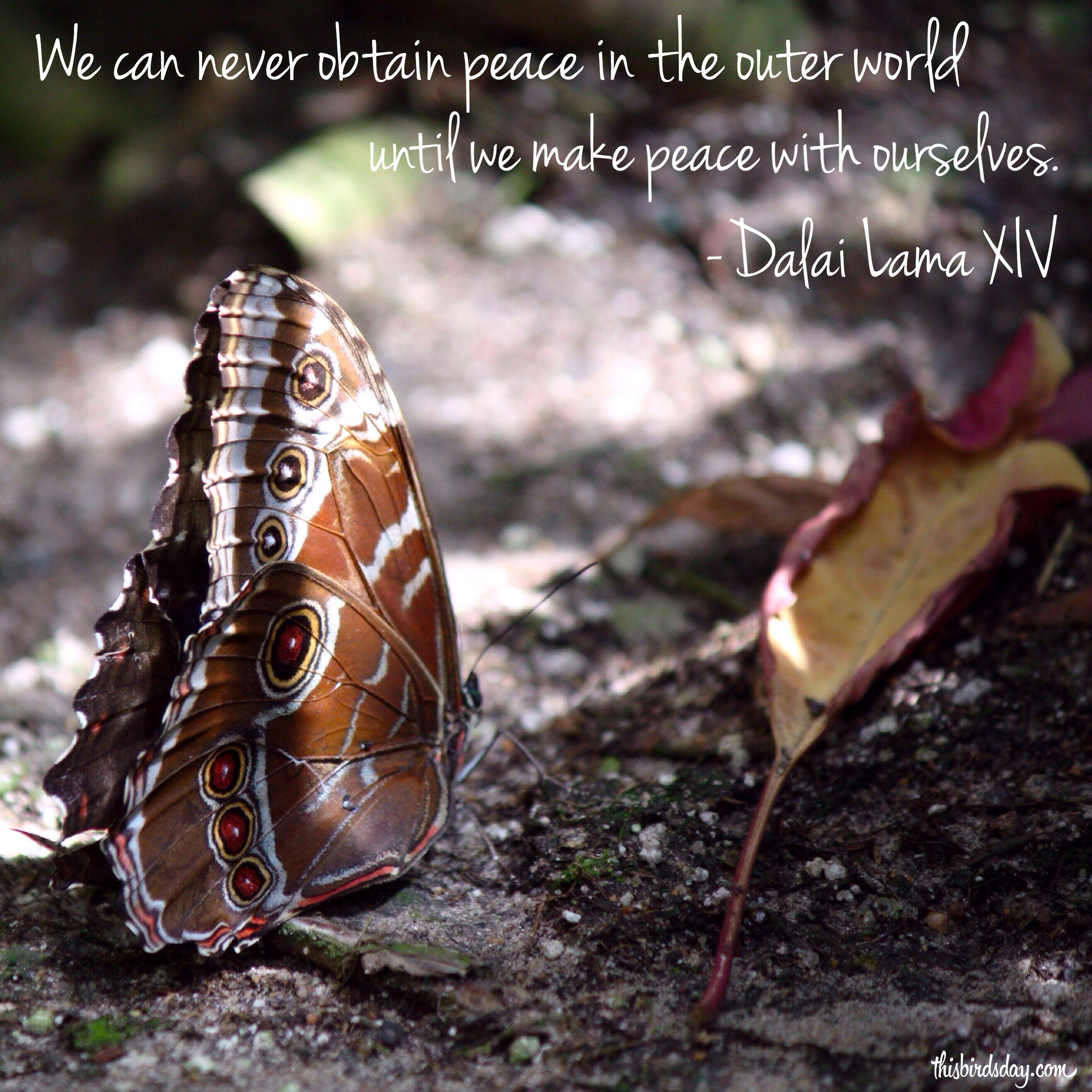 We can never obtain peace in the outer world until we make peace with ourselves. Photo copyright: Sheri Landry