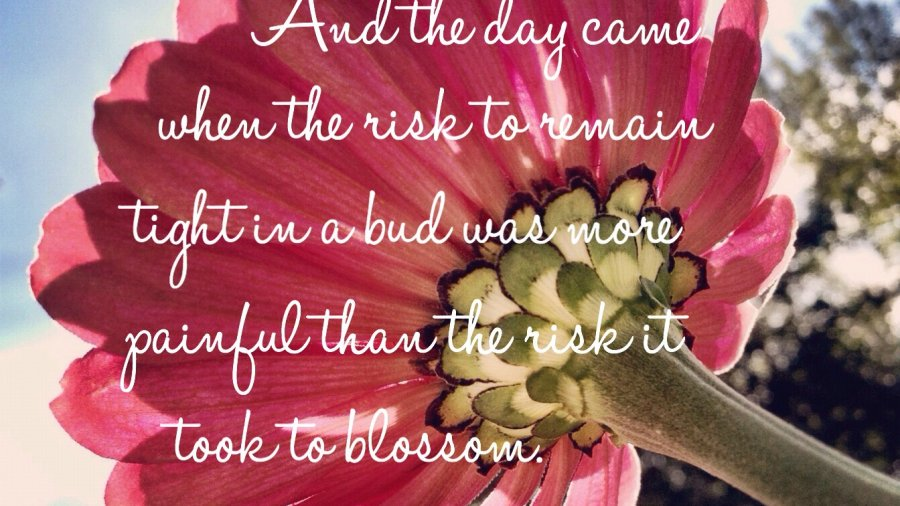 And the day came when the risk to remain tight in a bud was more painful than the risk it took to blossom. Quote by Anais Nin. Photo credits: Sheri Landry