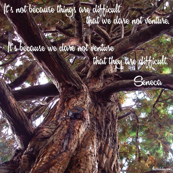 It's not because things are difficult that we dare not venture. It's because we dare not venture that they are difficult. Seneca Quote