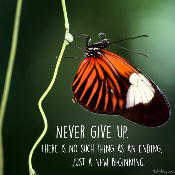 """Never give up. There is no such thing as an ending, just a new beginning."" Photo copyrights: Sheri Landry"