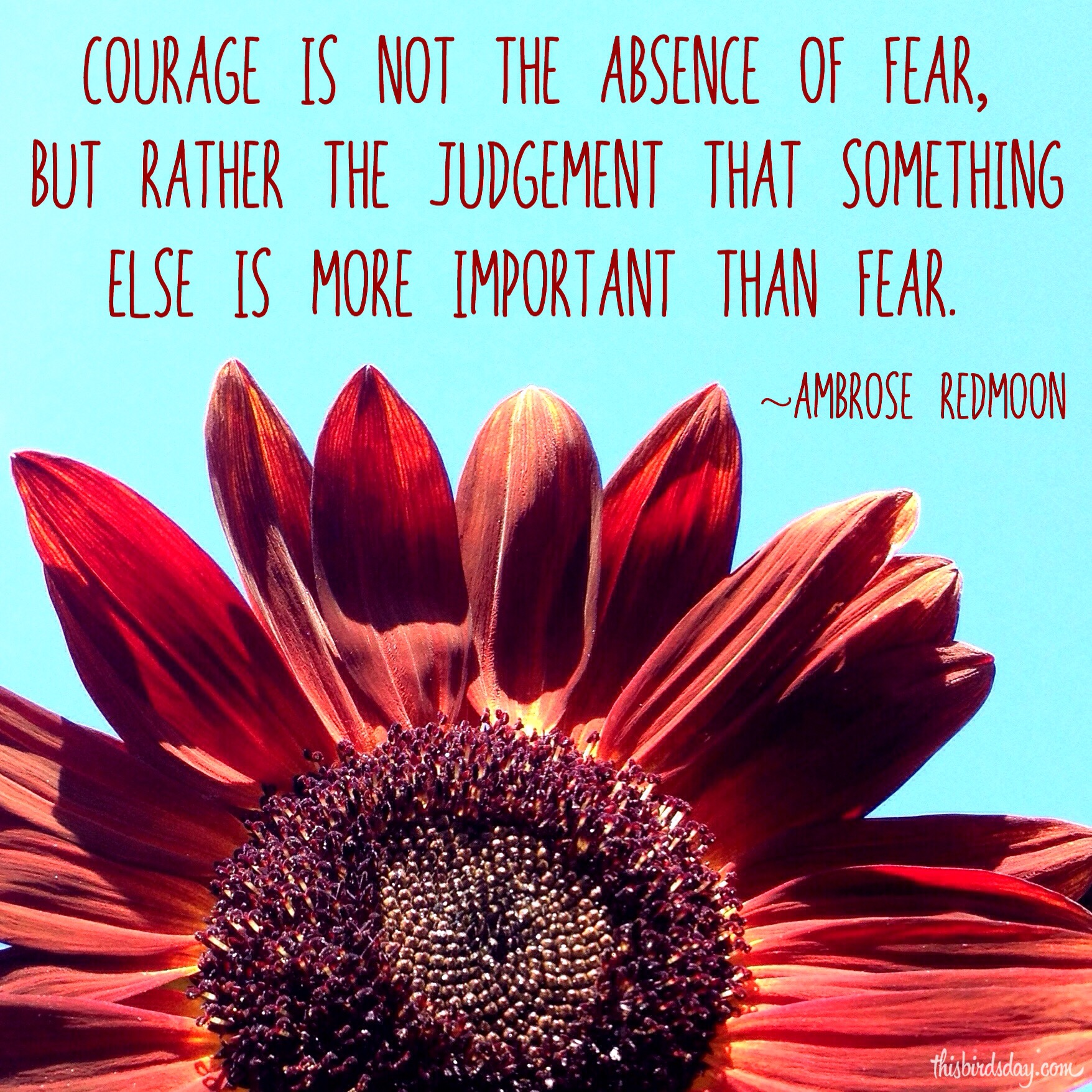 """""""Courage is not the absence of fear, but rather the judgement that something is more important than fear."""" Ambrose Redmoon. Photo copyright Sheri Landry"""