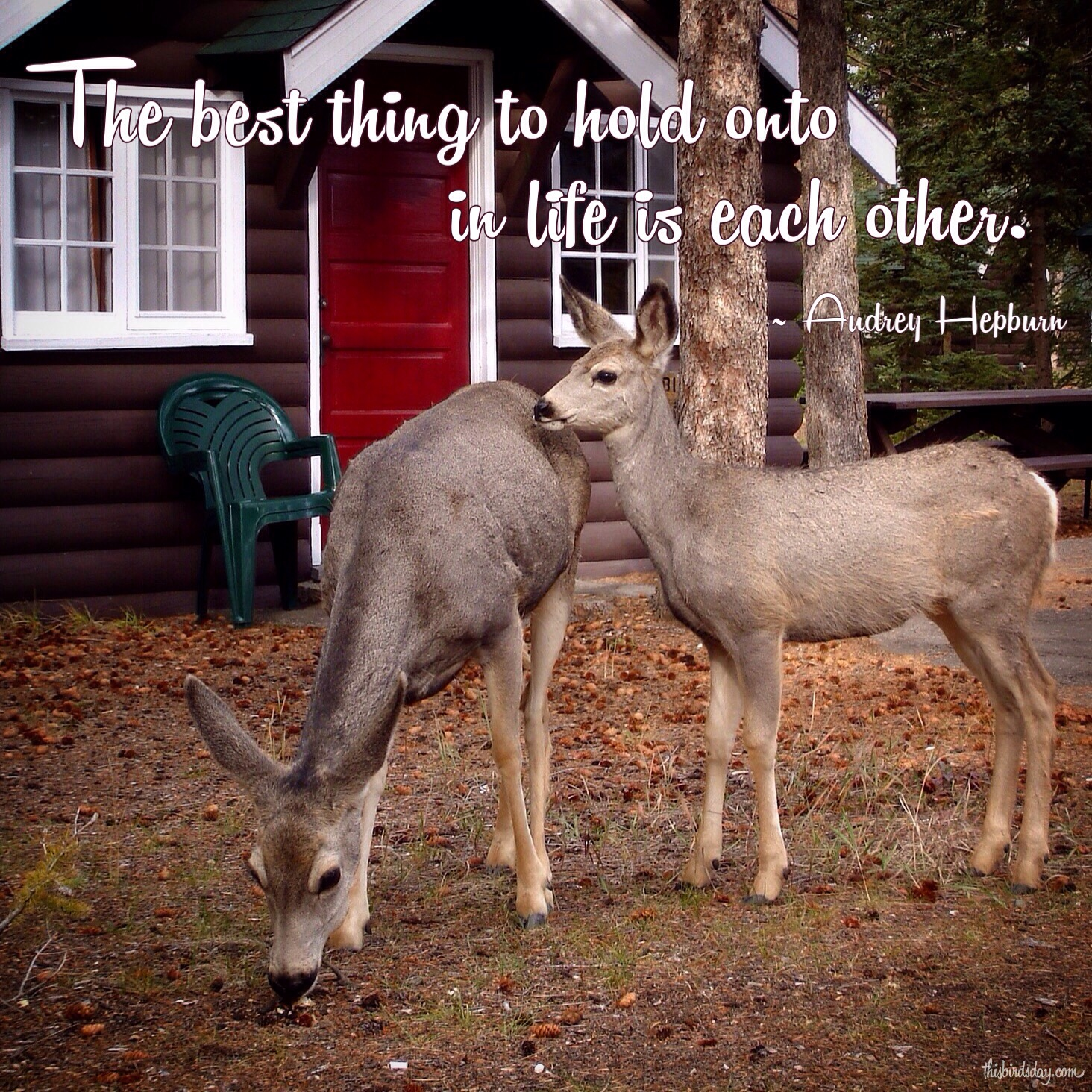 """The best thing to hold onto in life is each other."" Audrey Hepburn. Photo copyright Sheri Landry"