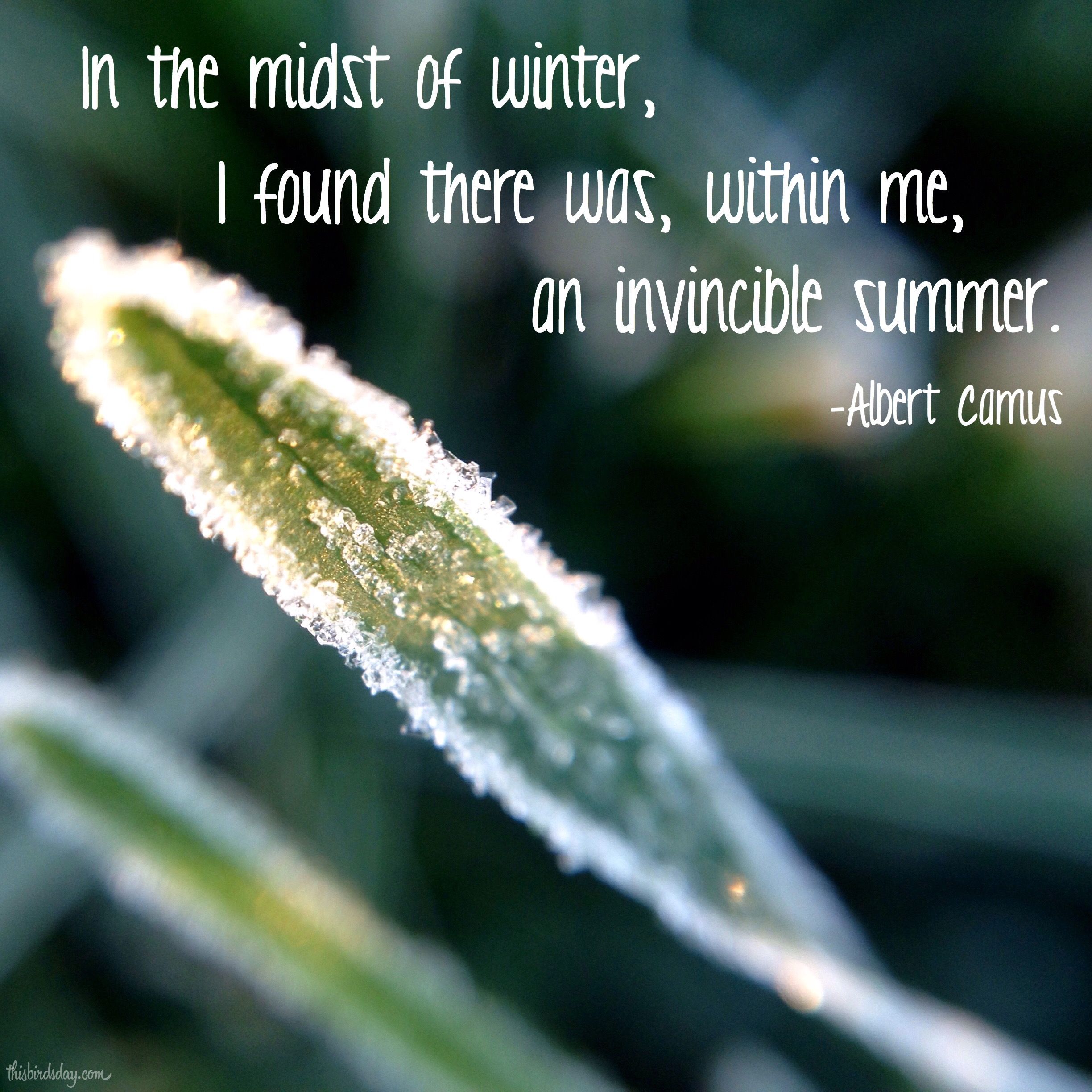 """""""In the midst of winter, I found there was, within me, an invincible summer."""" Albert Camus. Photo copyright Sheri Landry"""