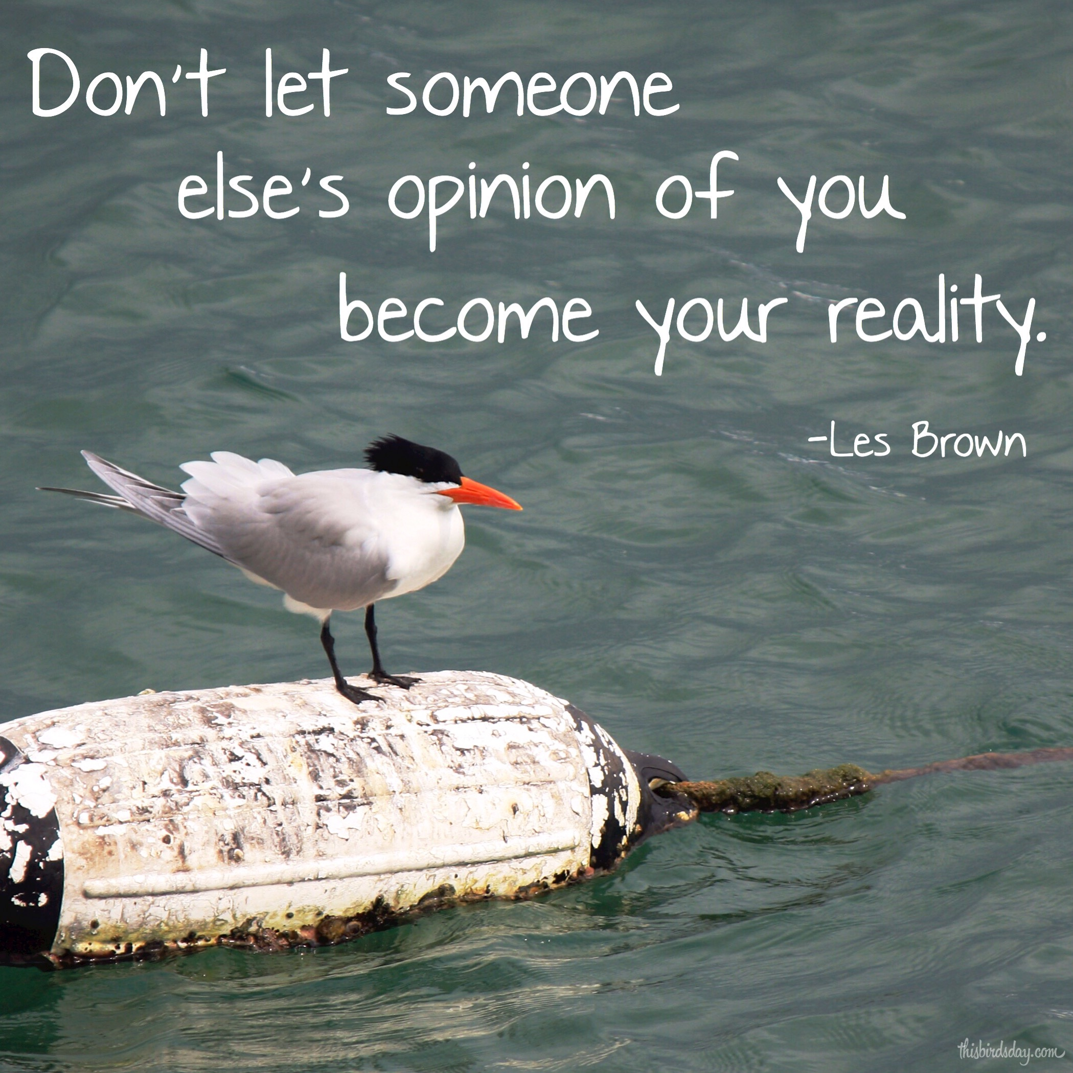 """""""Don't let someone else's opinion of you become your reality."""" Les Brown Photo Copyt=right Sheri Landry"""
