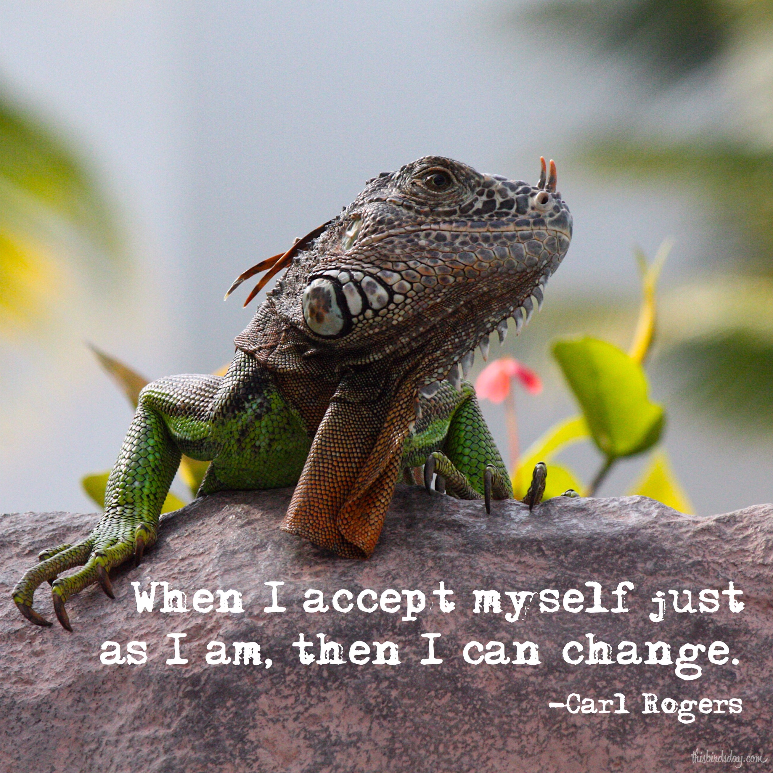 """""""When I accept myself just as I am, then I can change."""" Carl Rogers Photo Copyright Sheri Landry"""