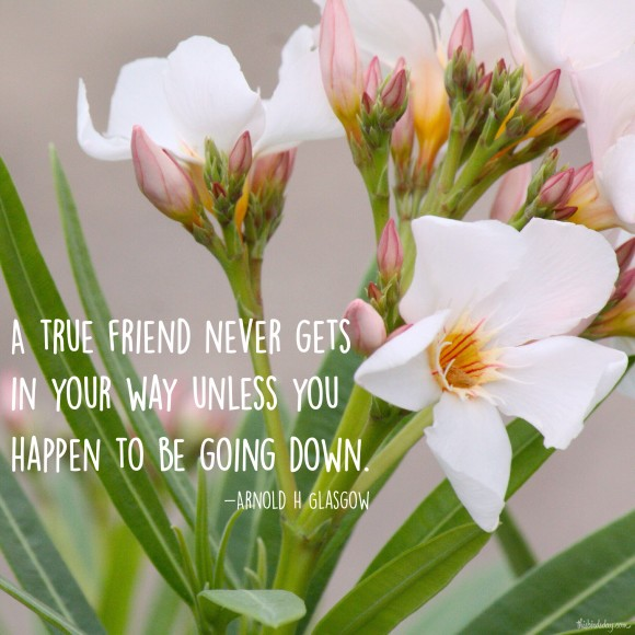 """A true friend never gets in your way unless you happen to be going down."" Arnold H. Glasgow Photo copyright Sheri Landry"