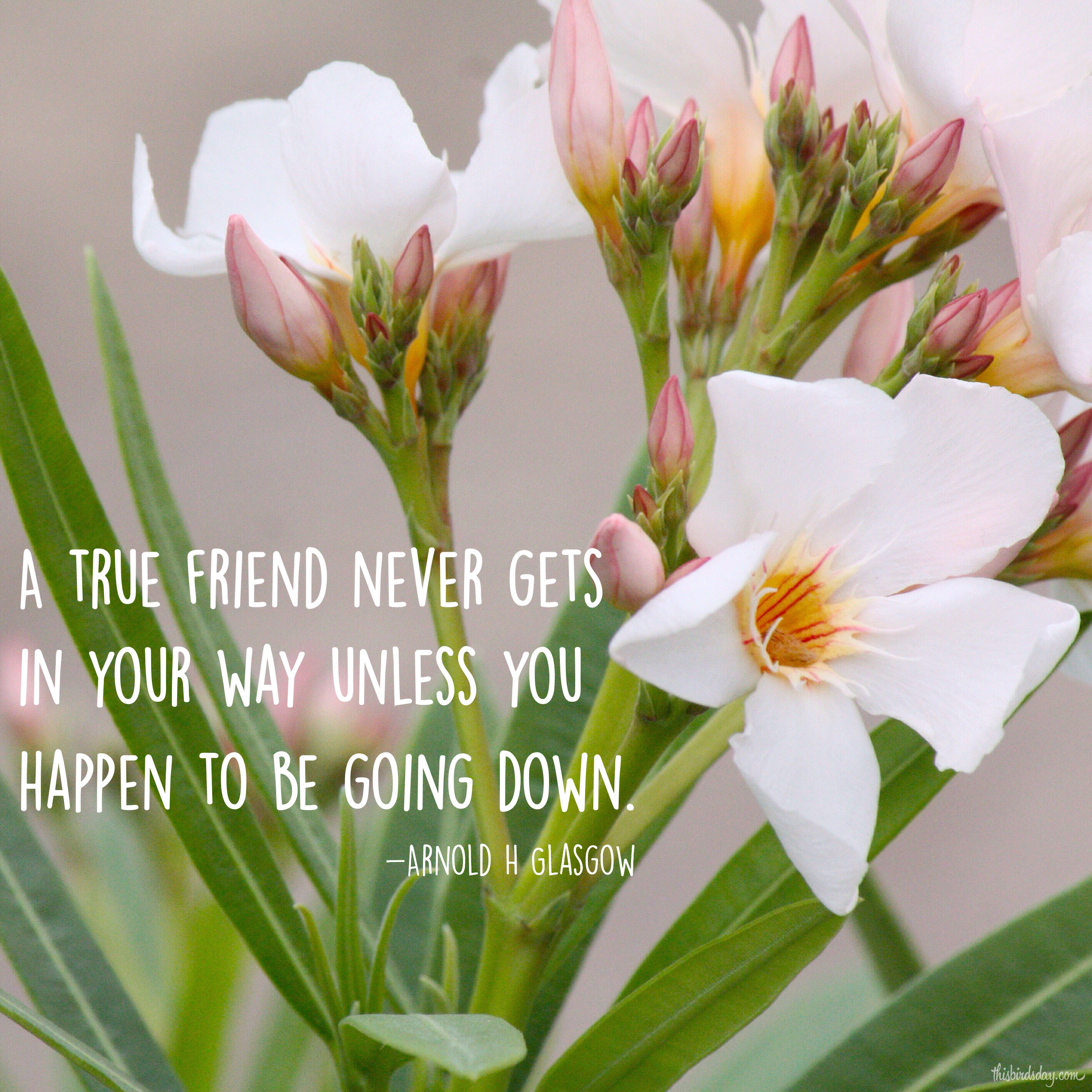 """""""A true friend never gets in your way unless you happen to be going down."""" Arnold H. Glasgow Photo copyright Sheri Landry"""