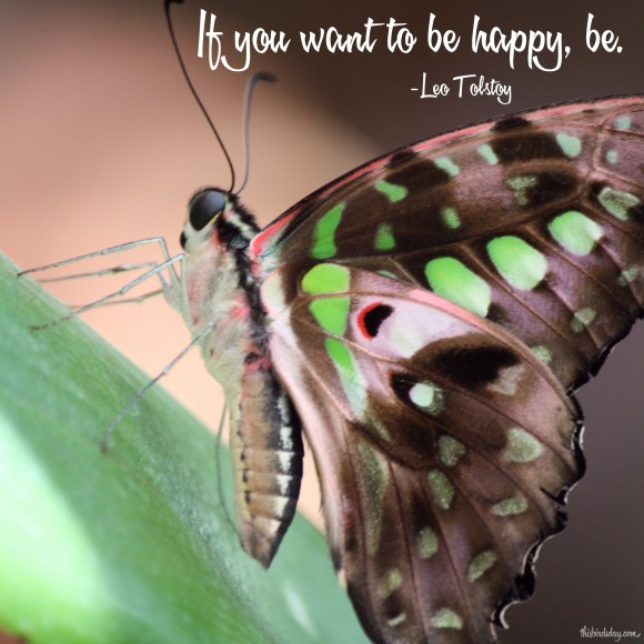 """If you want to be happy, be."" Leo Tolstoy Photo copyright Sheri Landry (This Bird's Day)"