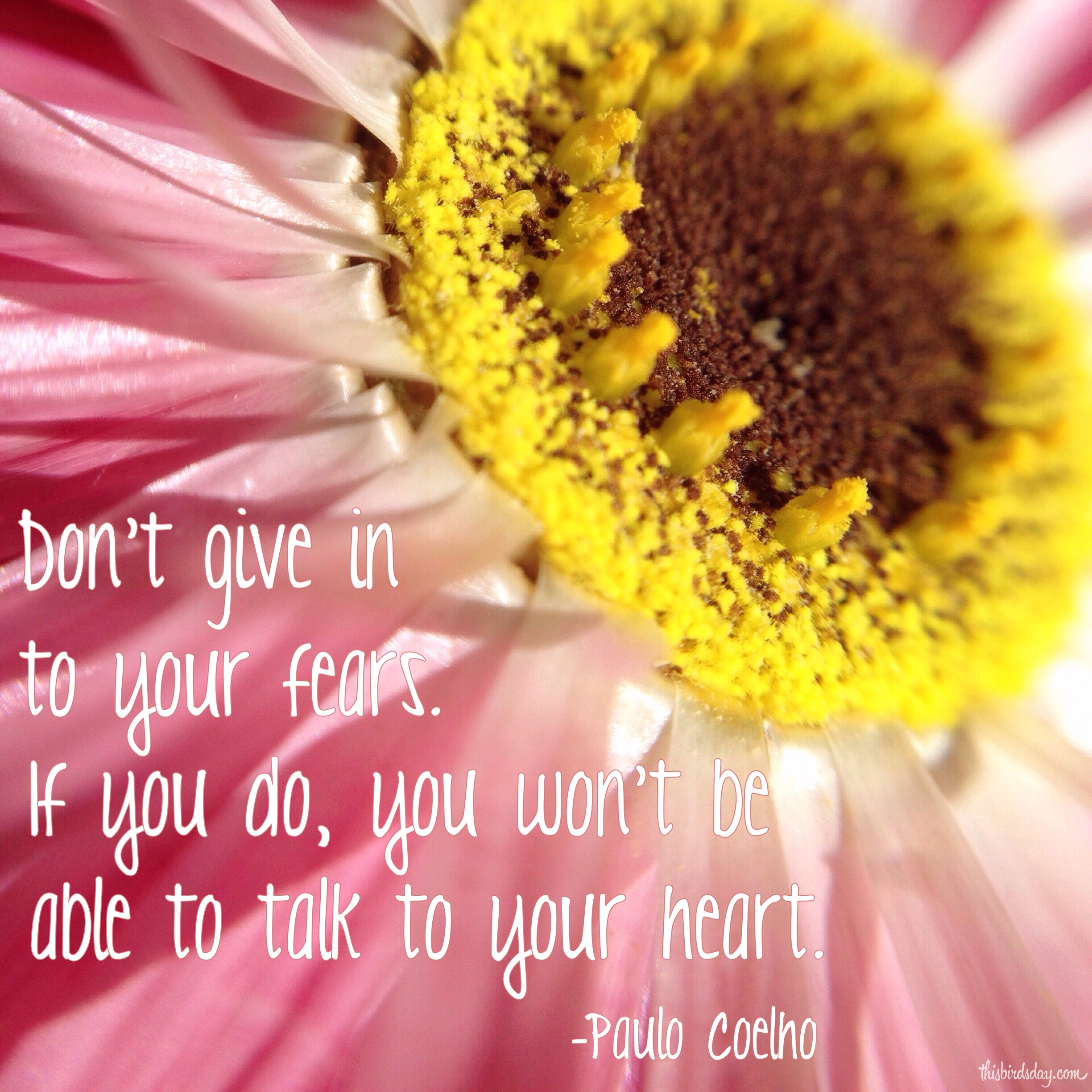 """""""Don't give in to your fears. If you do, you won't be able to talk to your heart."""" Paulo Coelho Photo copyright Sheri Landry"""