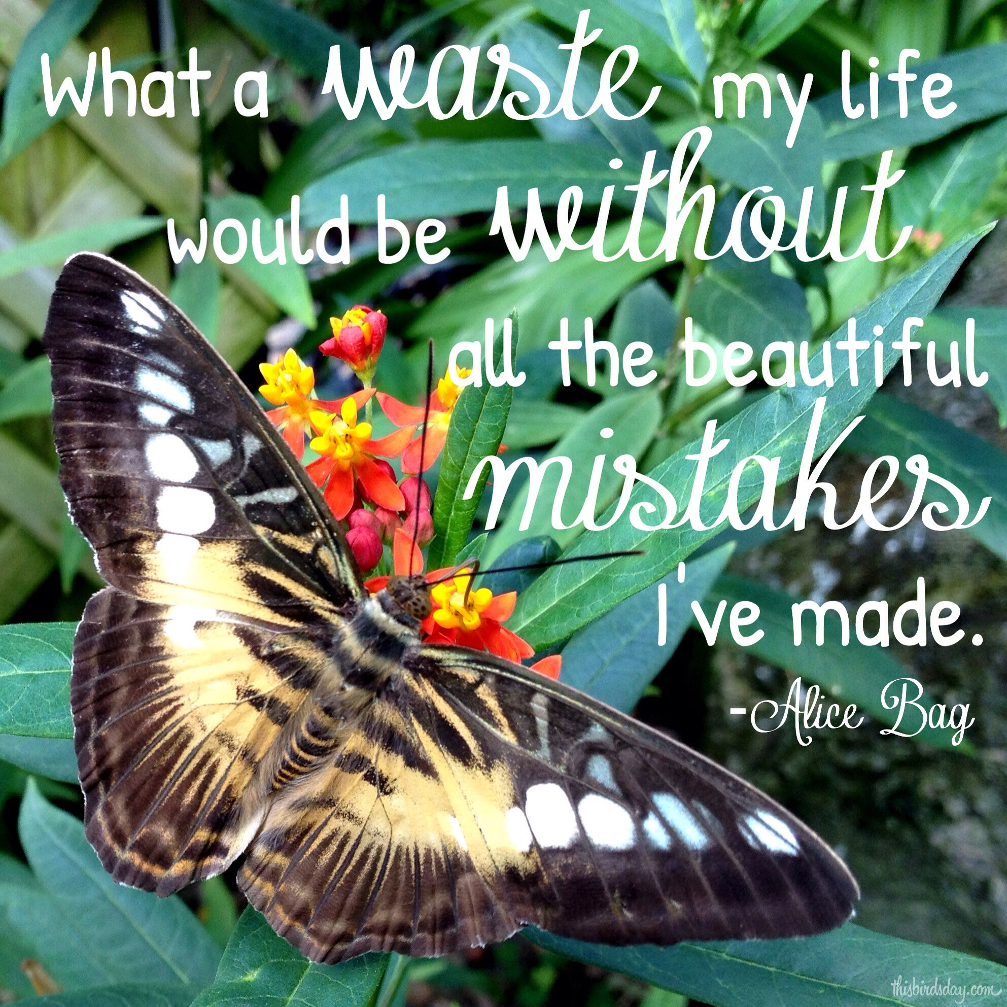 """What a waste my life would be without all of the beautiful mistakes I've made."" Alice Bay Photo copyright Sheri Landry"