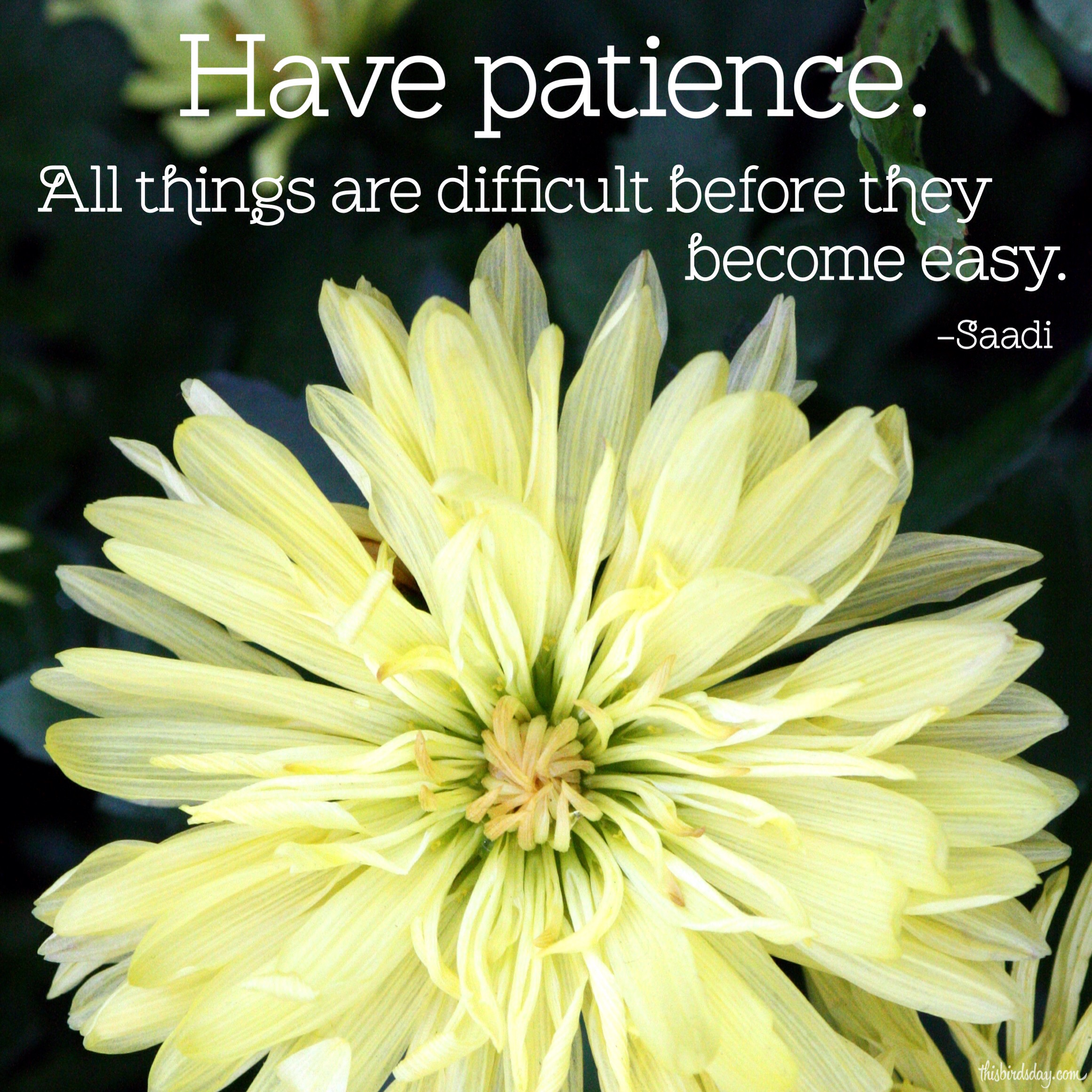 """""""Have patience. All things are difficult before they become easy."""" Saadi Photo copyright Sheri Landry"""