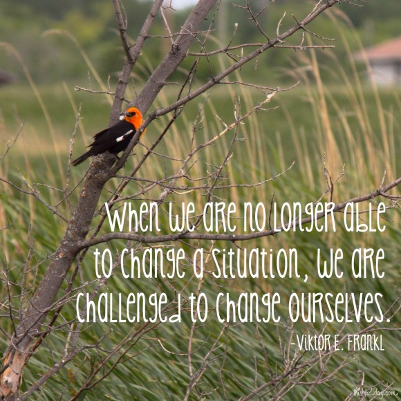 """""""When we are no longer able to change a situation, we are challenged to change ourselves."""" Viktor E Frankl Photo copyright Sheri Landry (This Bird's Day)"""