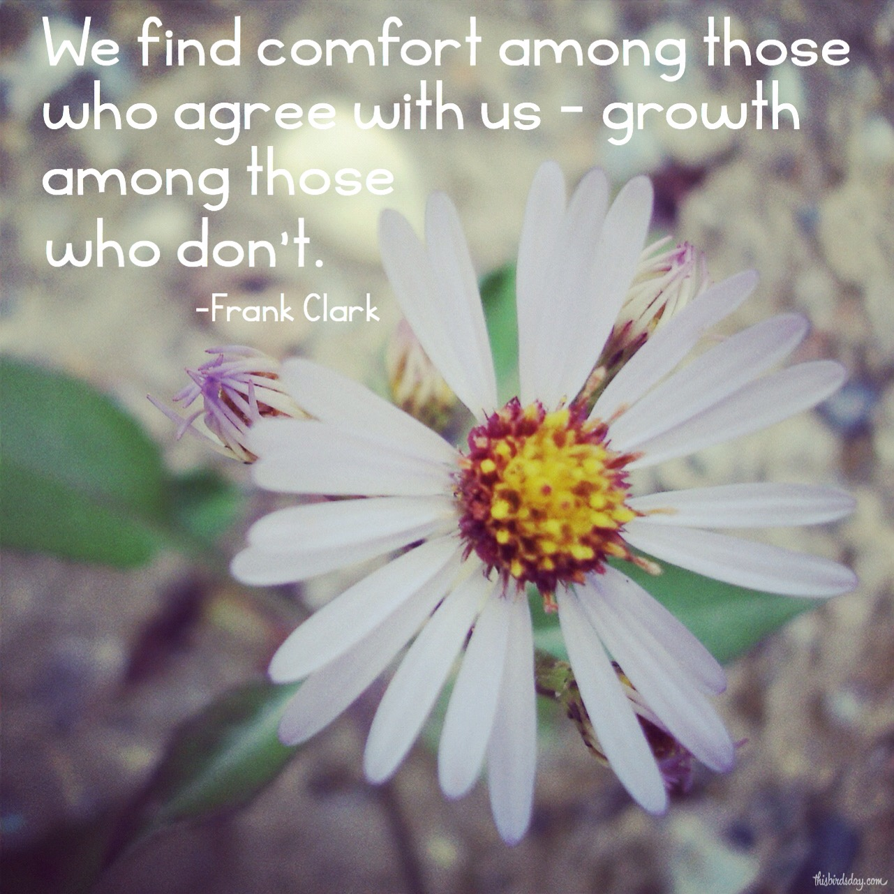 """We find comfort among those who agree with us - growth among those who don't."" Frank Clark Photo dopyright Sheri Landry (thisbirdsday.com)"