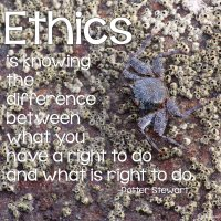 """Ethics is knowing the difference between what you have a right to do and what is right to do."" Potter Stewart Photo copyrights Sheri Landry (thisbirdsday.com)"