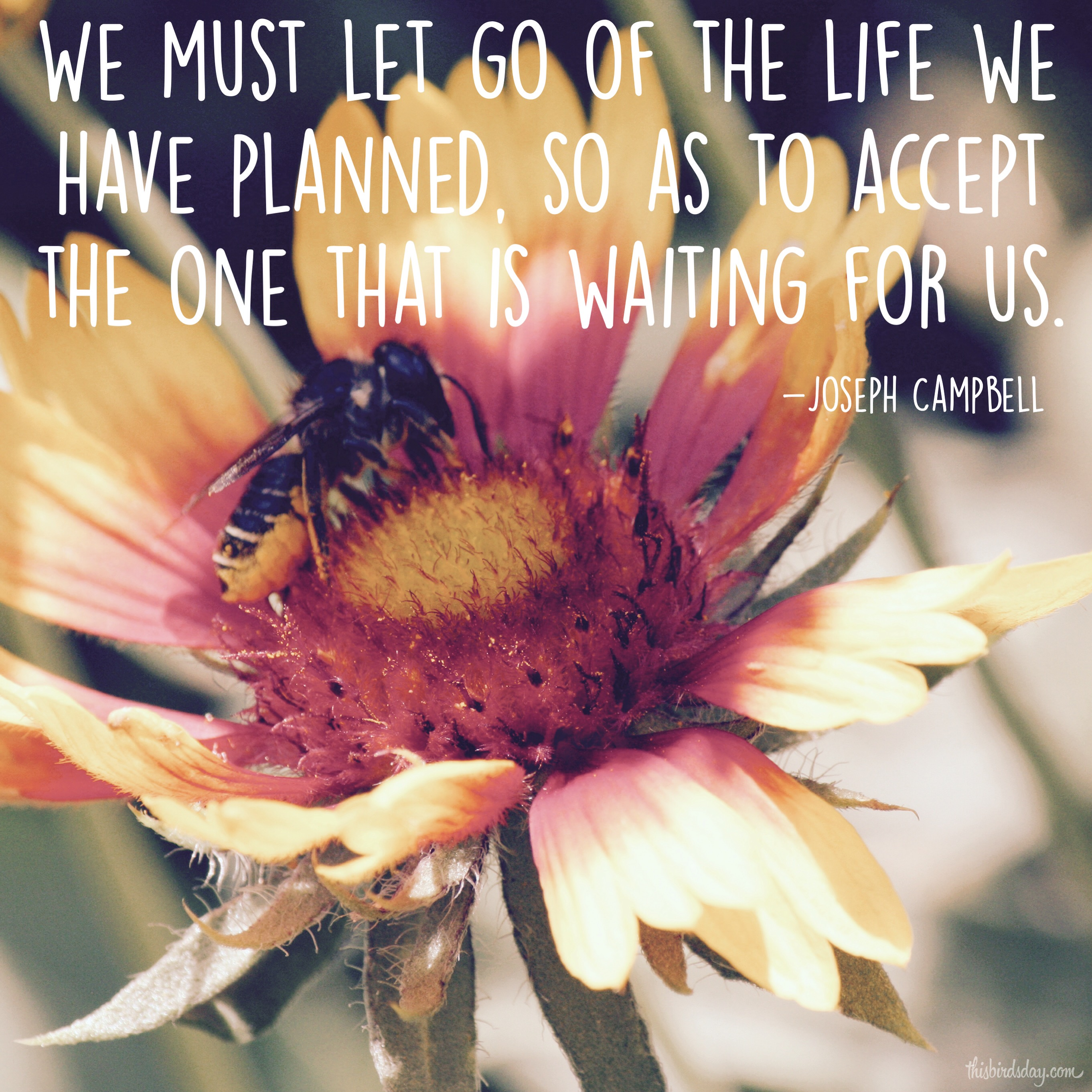 """""""We must let go of the life we have planned, so as to accept the one that is waiting for us."""" Joseph Campbell Photo copyright Sheri Landry (thisbirdsday.com)"""