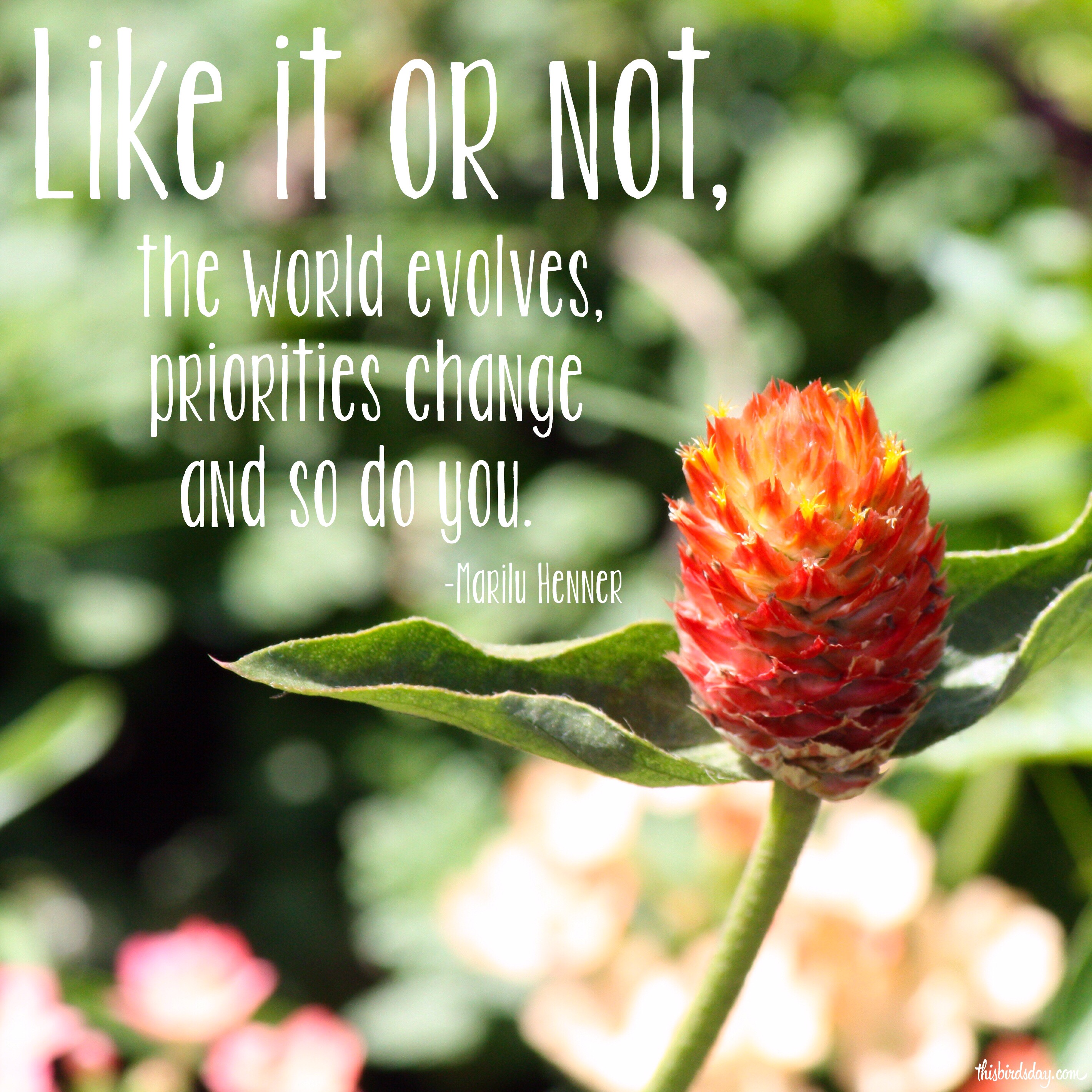 """""""Like it or not, the world evolves, priorities change and so do you."""" Marilu Henner Photo copyright Sheri Landry"""