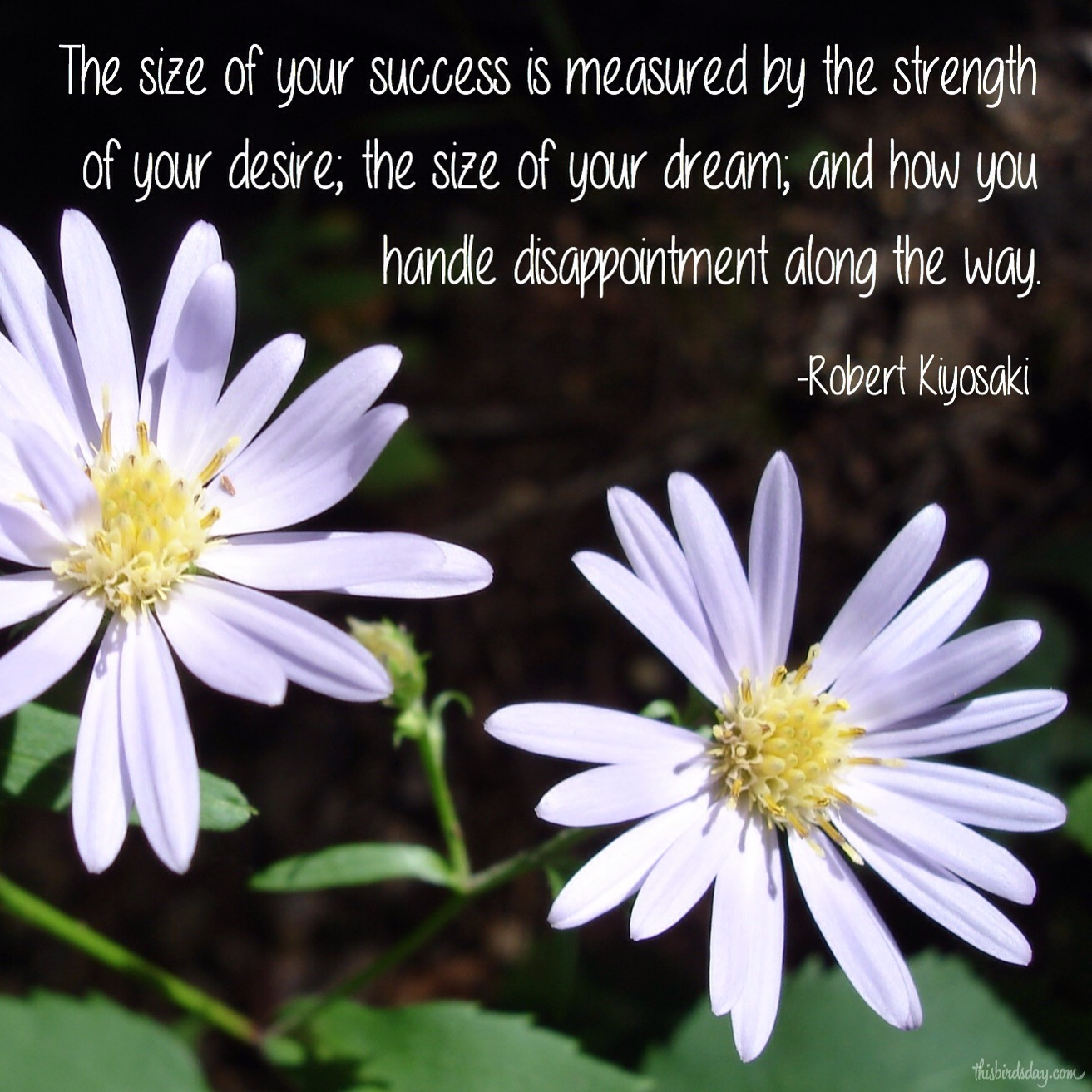 """""""The size of your success is measured by the strength of your desire, the size of your dream, and how you handle disappointment along the way."""" Robert Kiyosaki Photo copyright Sheri Landry"""