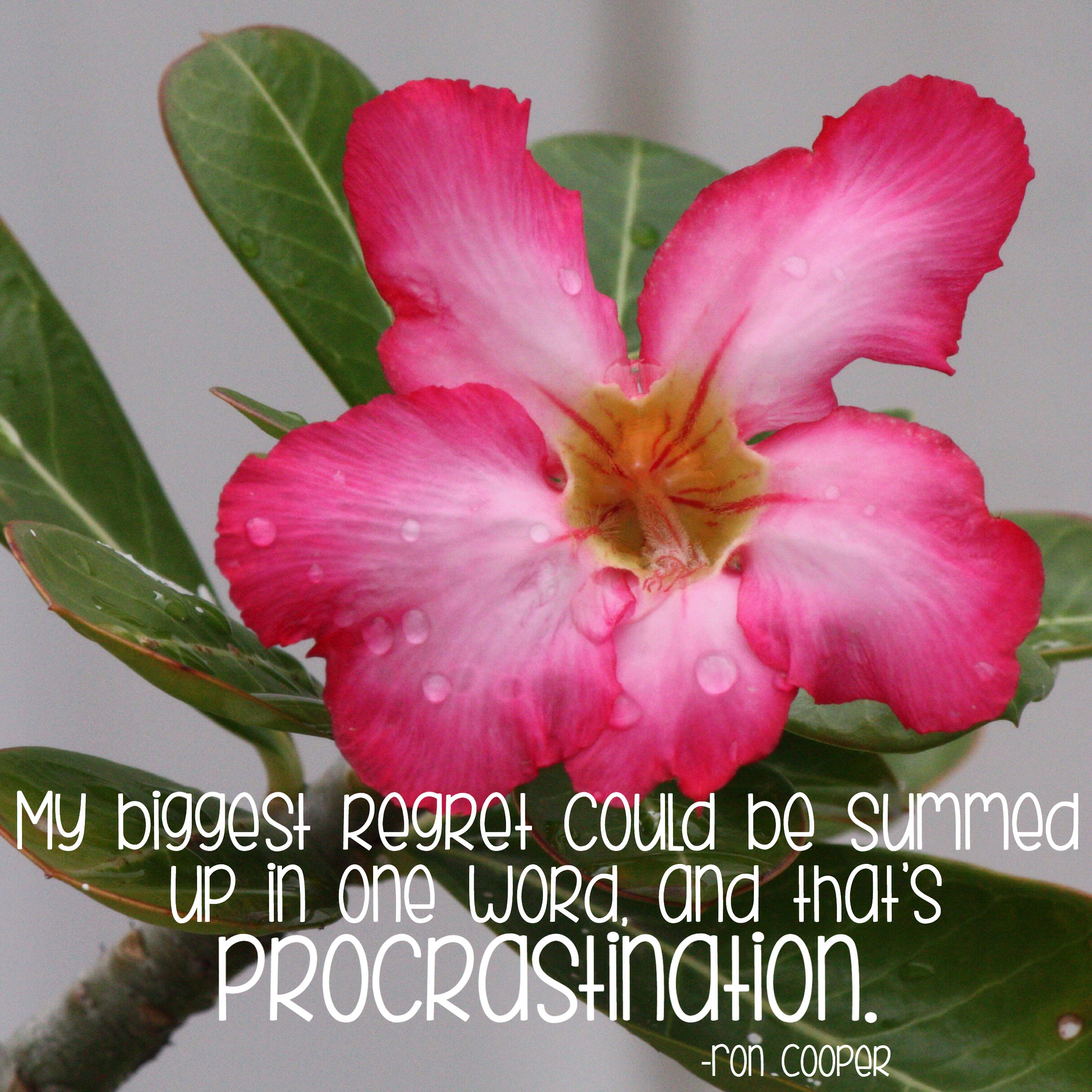 """""""My biggest regret could be summed up in one word, and that's procrastination."""" Ron Cooper Photo copyright Sheri Landry"""