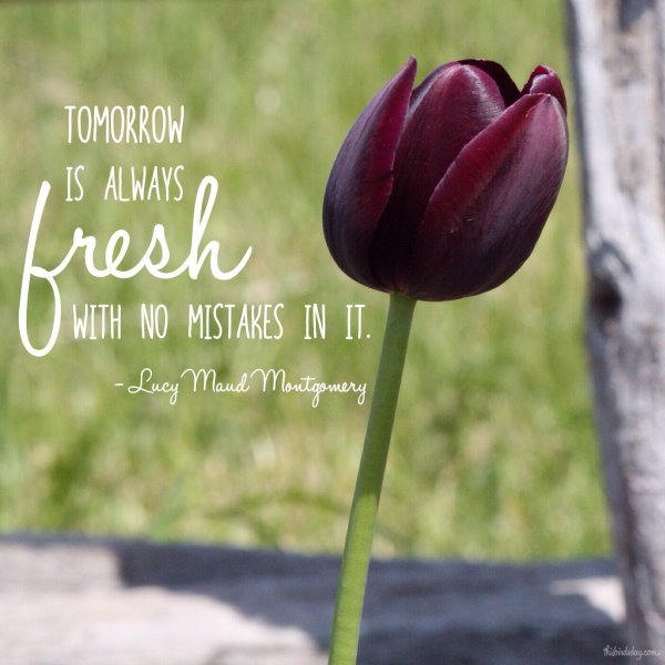 """Tomorrow is always fresh with no mistakes in it."" Lucy Maud Montgomery quote. Photo copyright Sheri Landry"