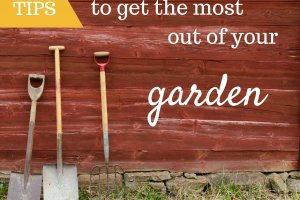 Tips to get the most out of your garden