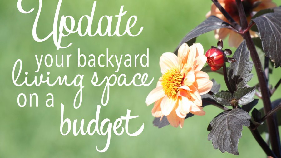 Update your back yard living space on a budget