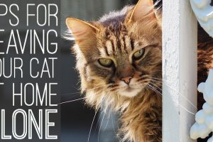 Tips-leaving-cat-alone-home