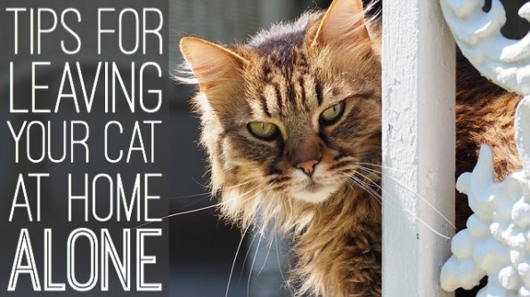 Tips for leaving your cat alone at home during vacation