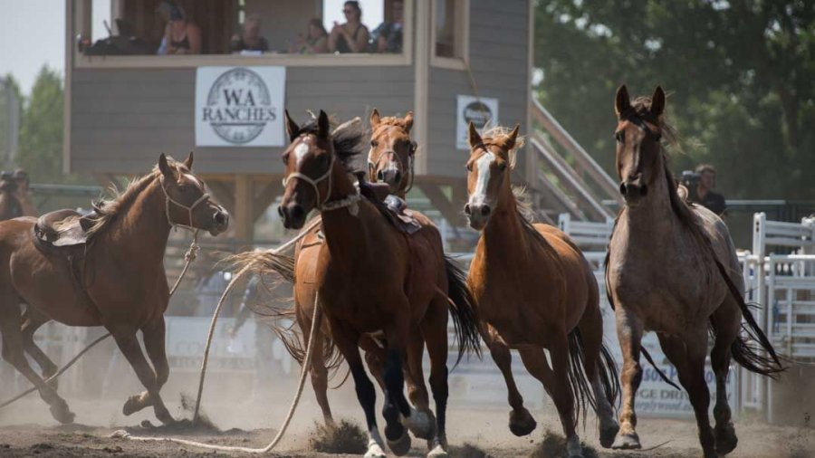 Cochrane Rodeo puts you right next to the action