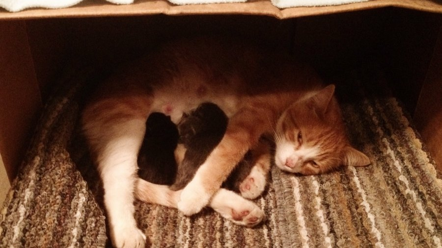 The Tale of Three Kittens and Their Mommy