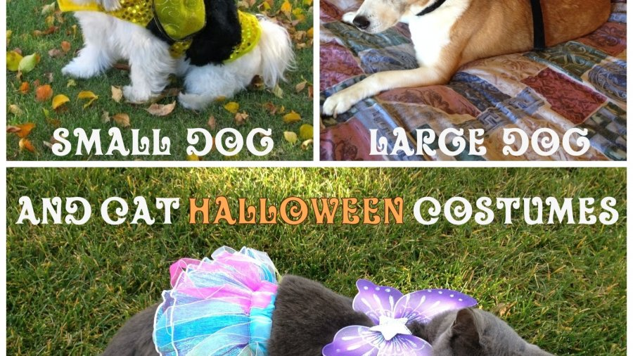 Best Small Large Dog Cat Halloween Pet Costumes