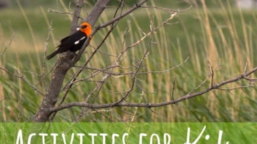 Bird on a tree for a post on Activities for Kids at the Cabin. Photo copyrights to Sheri Landry