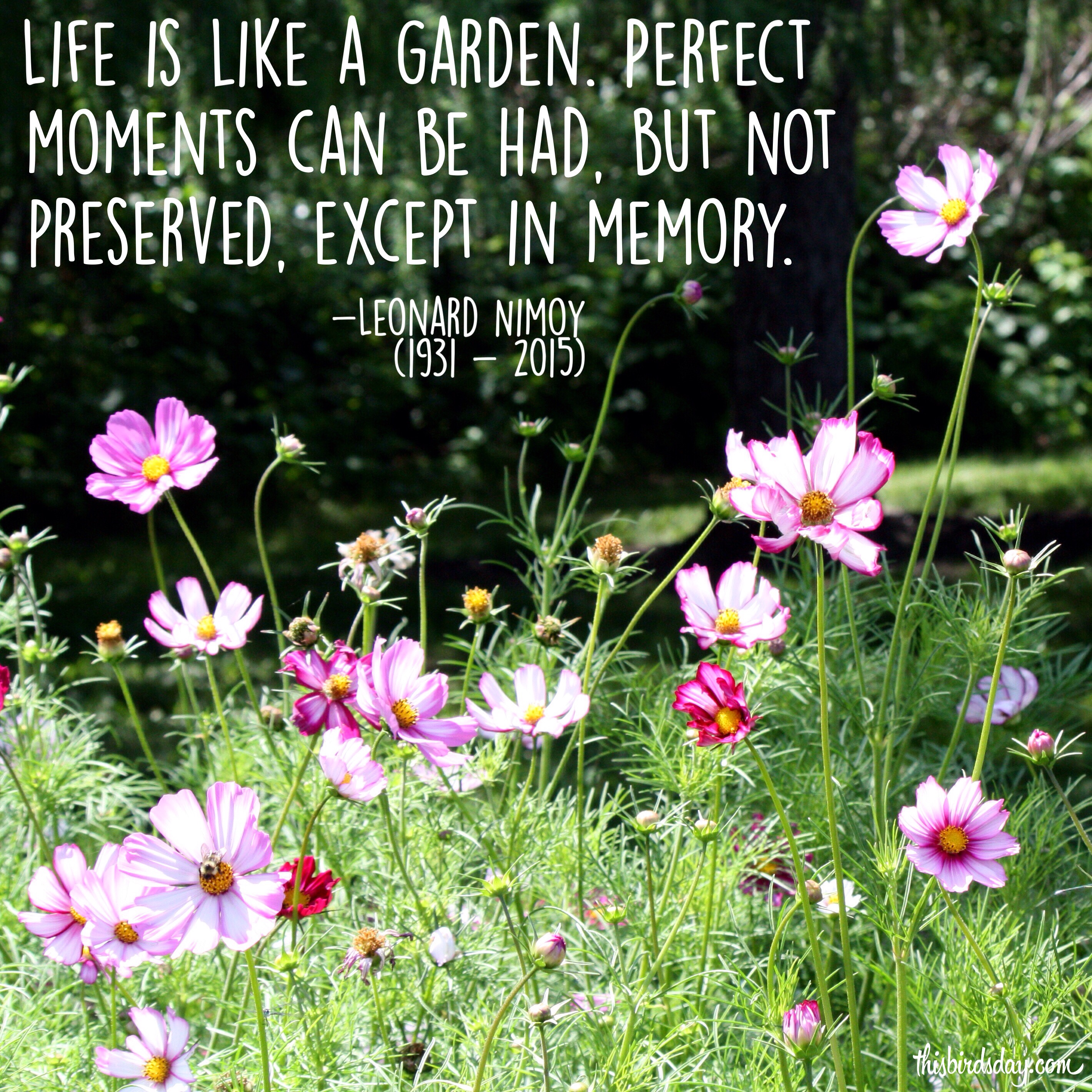 """Life is like a garden. Perfect moments can be had, but not preserved, except in memory."" Leonard Nimoy Photo copyright Sheri Landry"