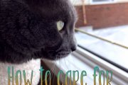How to care for your cat in winter
