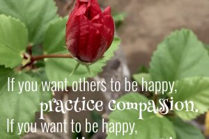 """If you want others to be happy, practice compassion. If you want to be happy, practice compassion."" Dalai Lama Photo copyright Sheri Landry"
