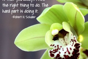 """The truth of the matter is that you always know the right thing to do. The hard part is doing it."" Robert H. Schuller Photo copyright Sheri Landry"