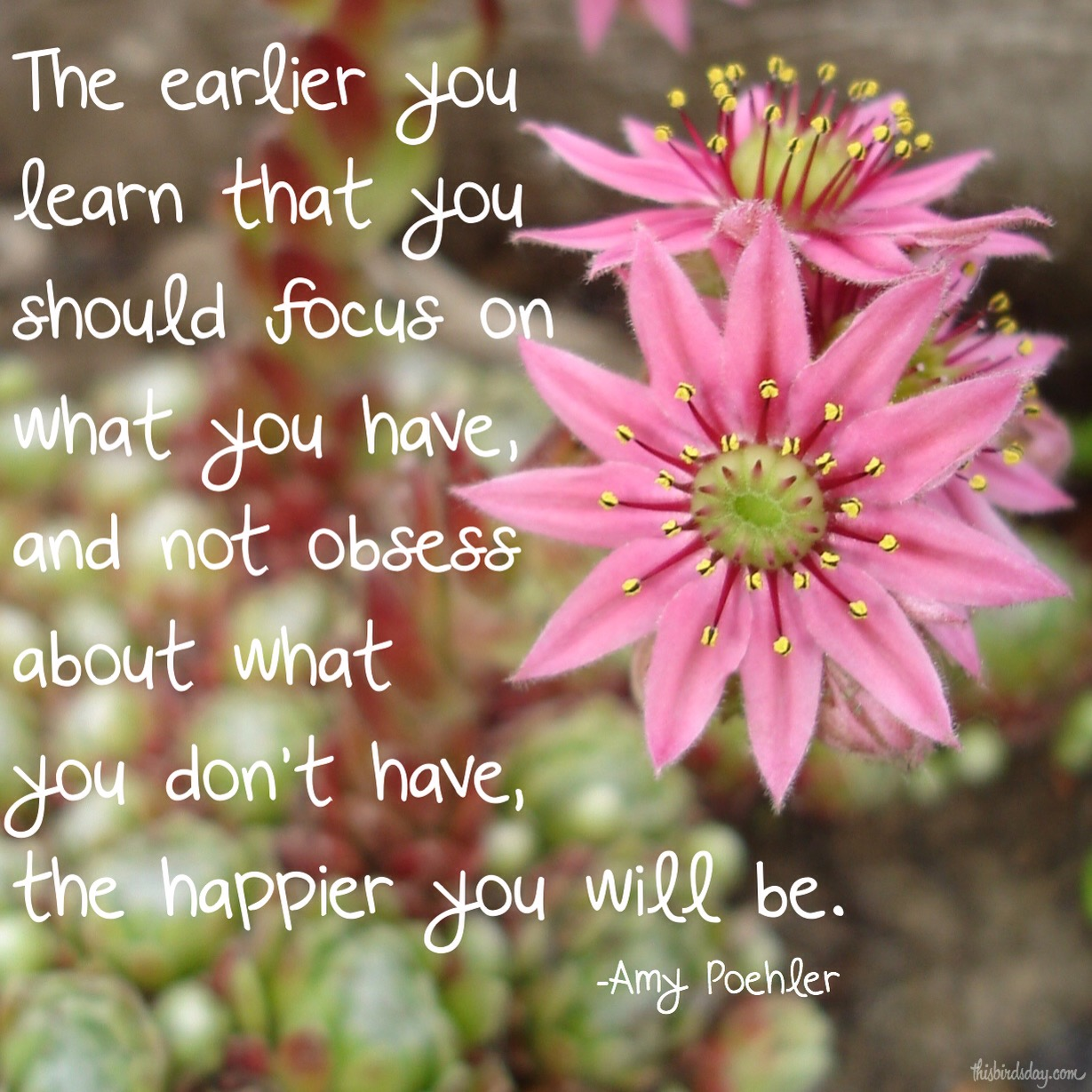 """The earlier you learn that you should focus on what you have, and not obsess about what you don't have, the happier you will be."" Amy Poehler Photo copyright Sheri Landry"