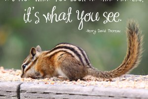 """It's not what you look at that matters, it's what you see."" Henry David Thoreau Photo copyright Sheri Landry"