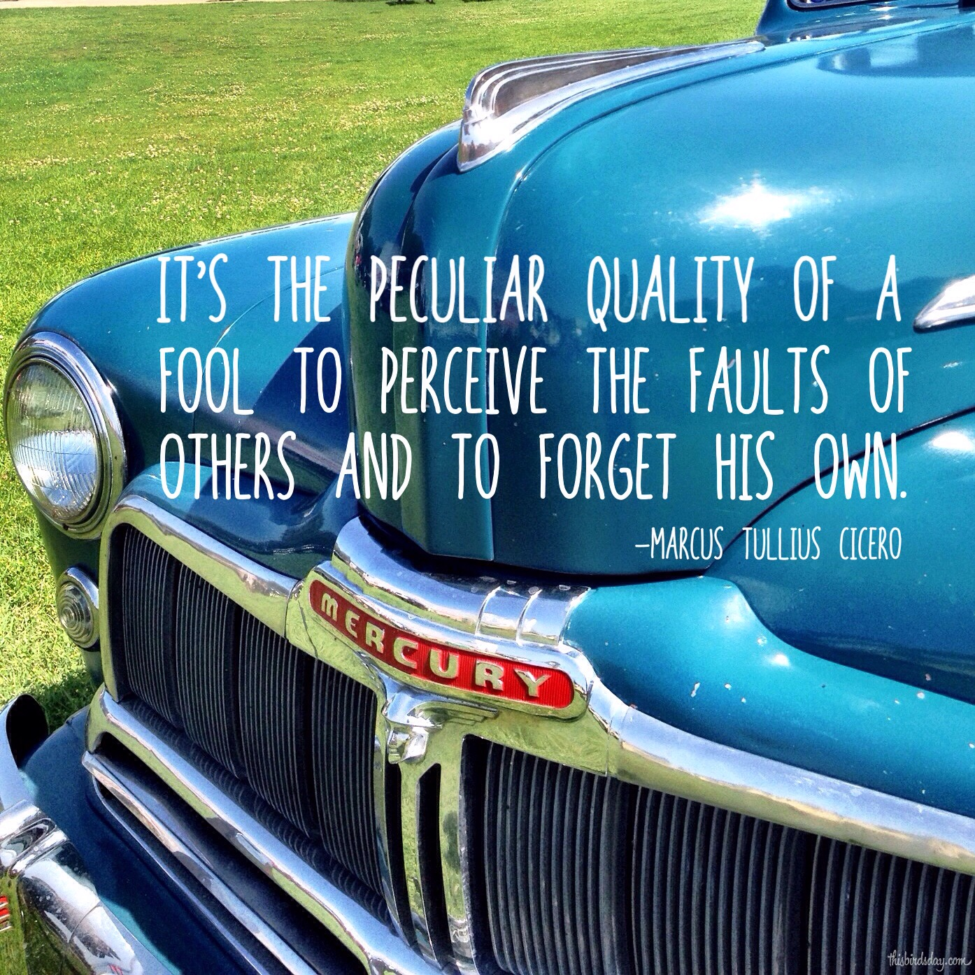 """""""It's the peculiar quality of a fool to perceive the faults of others and to forget his own."""" Marcus Tullius Cicero Photo Copyright Sheri Landry (thisbirdsday.com)"""