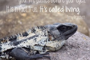 """It is often said that before you die your life passes before your eyes. It is in fact true. It's called living."" Terry Pratchett Photo copyright Sheri Landry (thisbirdsday.com)"