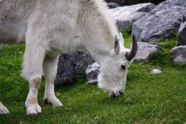 Canadian Wilds at the Calgary Zoo. Photo Sheri Landry