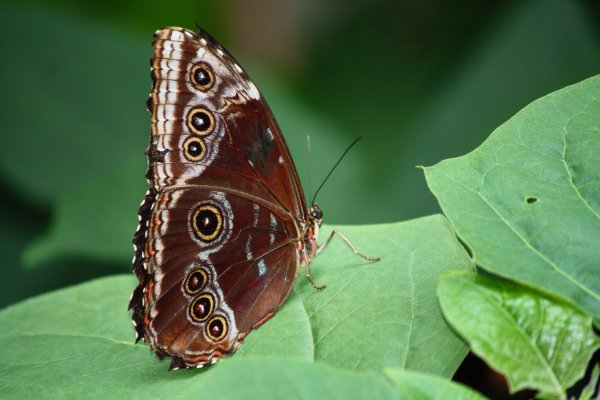 Numerous butterflies can be found in the Conservatory / Garden area so have your camera ready. Photo Sheri Landry
