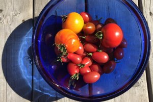 Colourful garden tomatoes. Photo copyright Sheri Landry