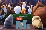 Tips for a Secret Life of Pets viewing party with your fur family