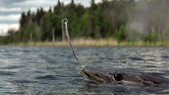 Just pulling on a line: The thrill of catching your own meal